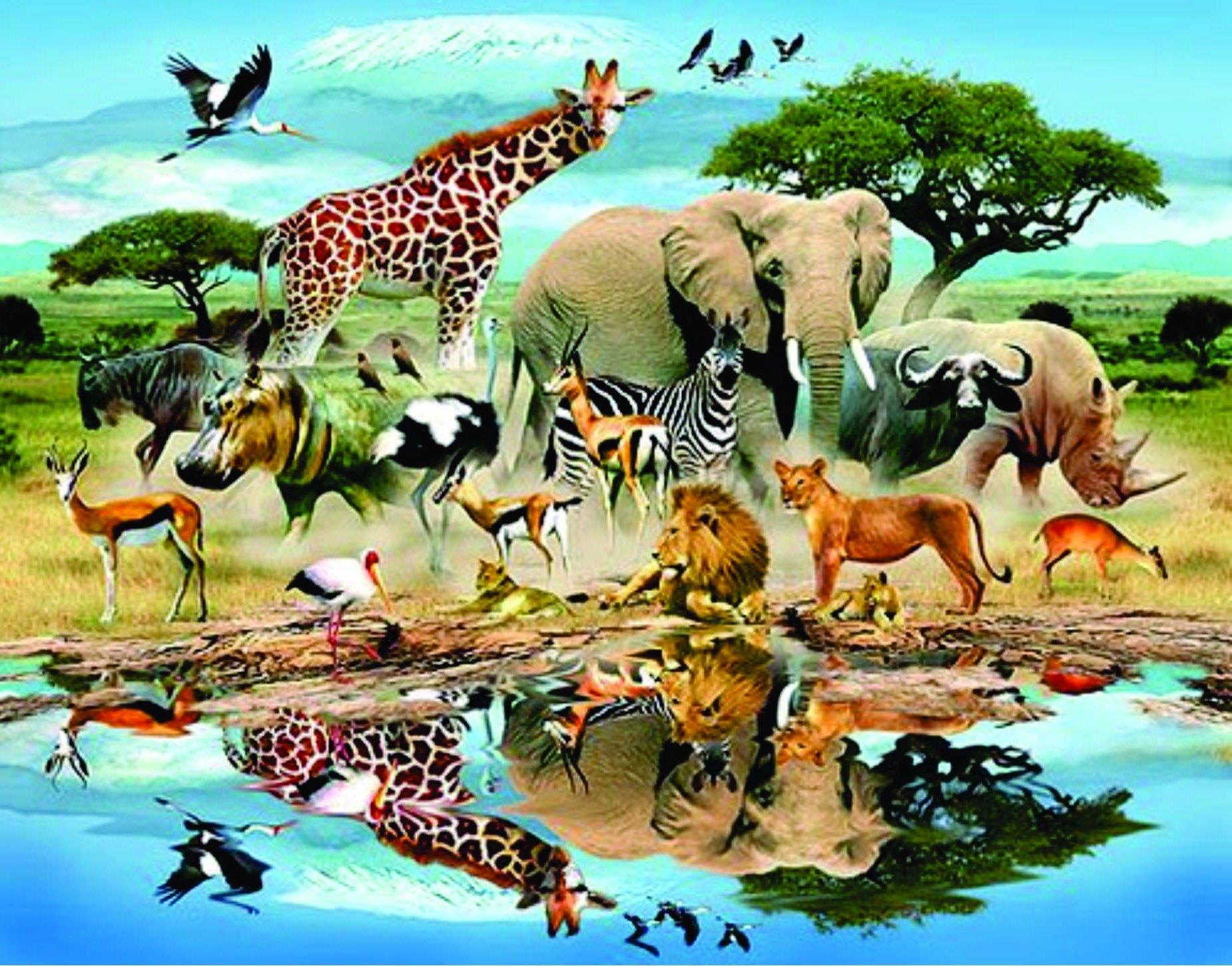 3 / 5 000 / 5 1 / 5 в своих фотографиях он пытается передать завораживающую красоту животного мира африки